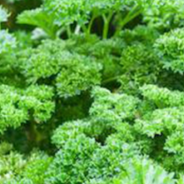 Parsley Extract pic - Rekick